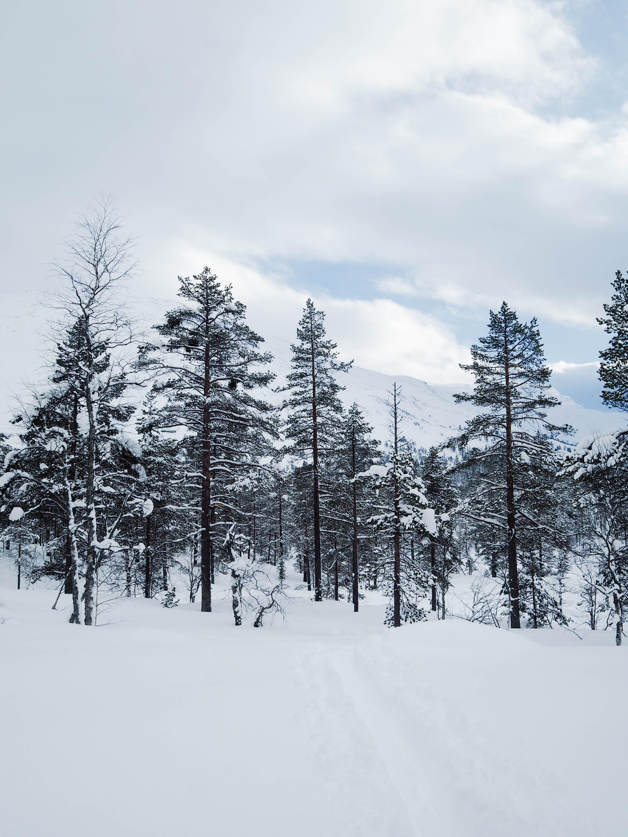 Skitur langrenn