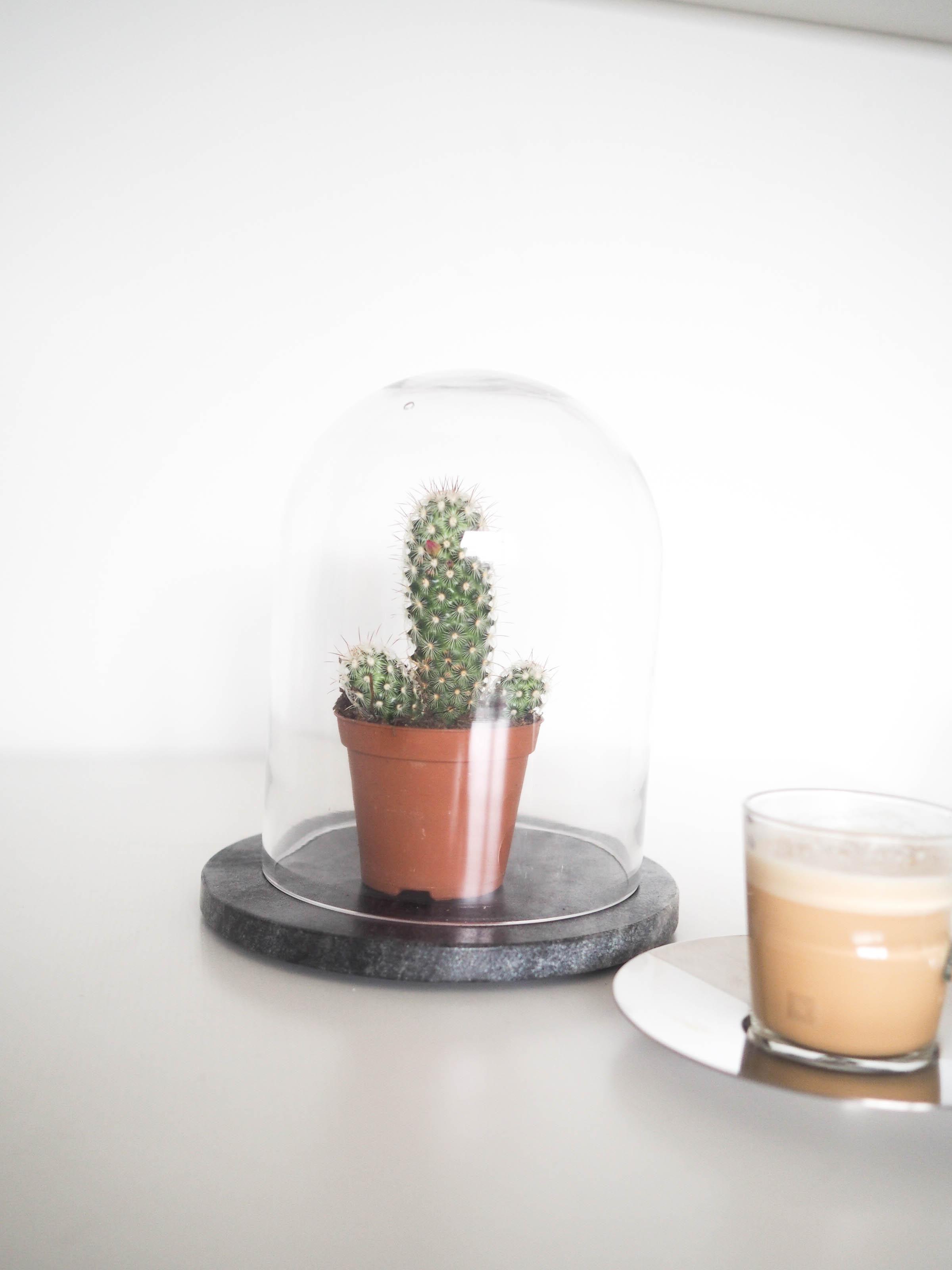 kaktus interiør